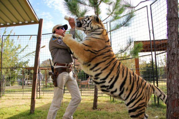 Tiger King 3